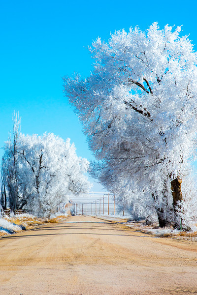FrostedTrees (1 of 3).jpg