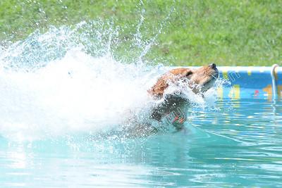 Koferl's Brett Splash 8