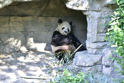 5-29 National Zoo