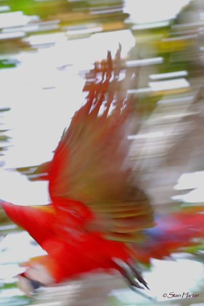 Flash of Scarlet.jpg