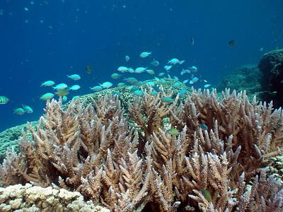 Cemetery Reef (snorkel) - 2/23/10
