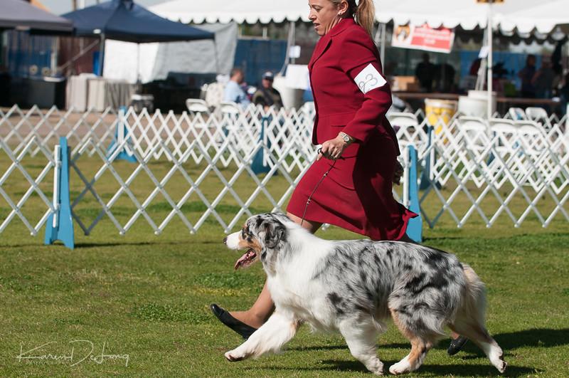 20170205_Australian Shepherds_Lost Dutchman Kennel Club-179.jpg