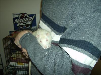 Is My Rat Blind?