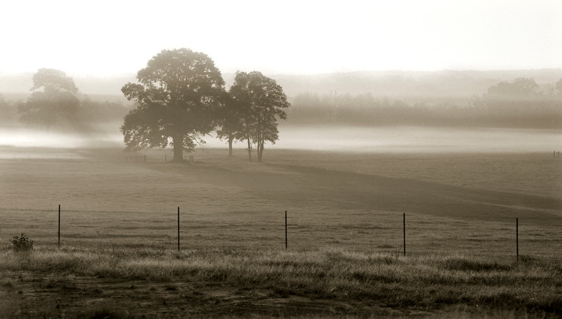11-97  471b Tree in Fog.jpg