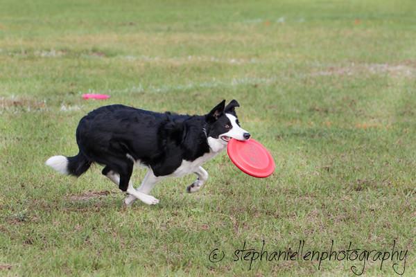 _MG_2478Up_dog_International_2016_StephaniellenPhotography.jpg