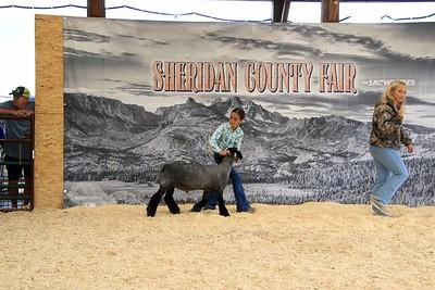 Junior Sheep Showmanship Final Drive