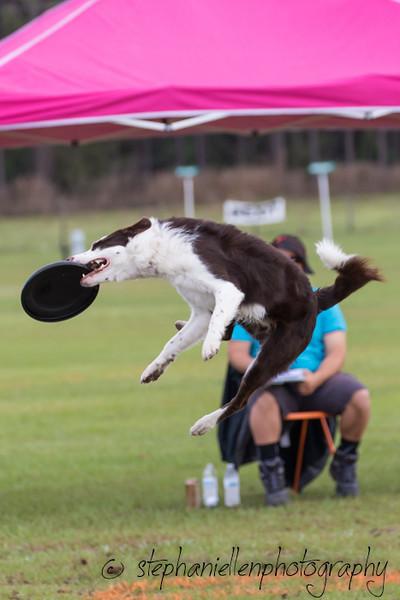 _MG_2287Up_dog_International_2016_StephaniellenPhotography.jpg