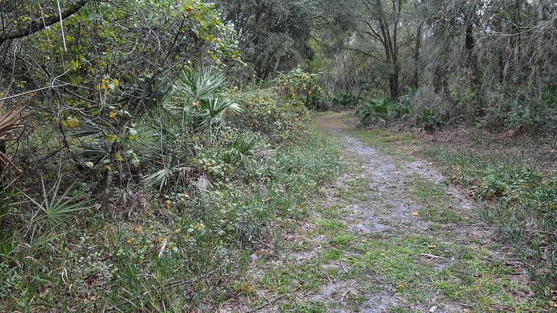 Marshall Hampton Reserve