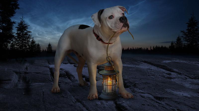fanal-dog.jpg