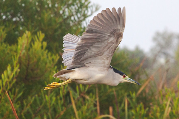 Ornithology  Field Trip#7 Las Gallinas Ponds 11/18