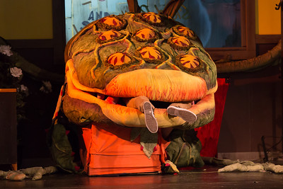 2016 - Little Shop of Horrors