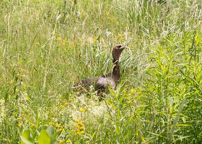 Wildlife at Work - June 15, 2016