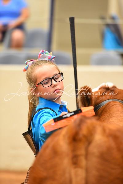 Steer Showmanship Ringshots