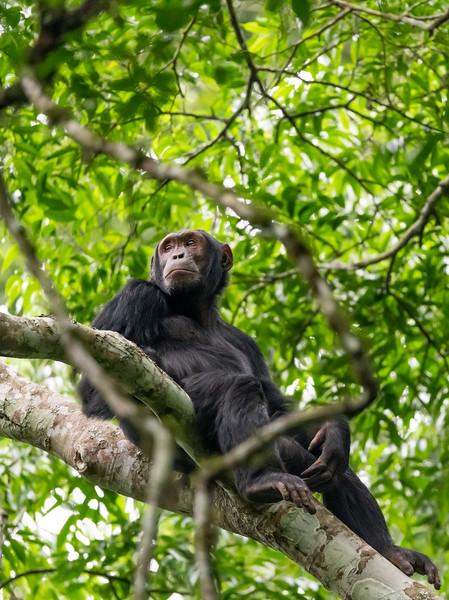 Uganda_T_Chimps-1126.jpg