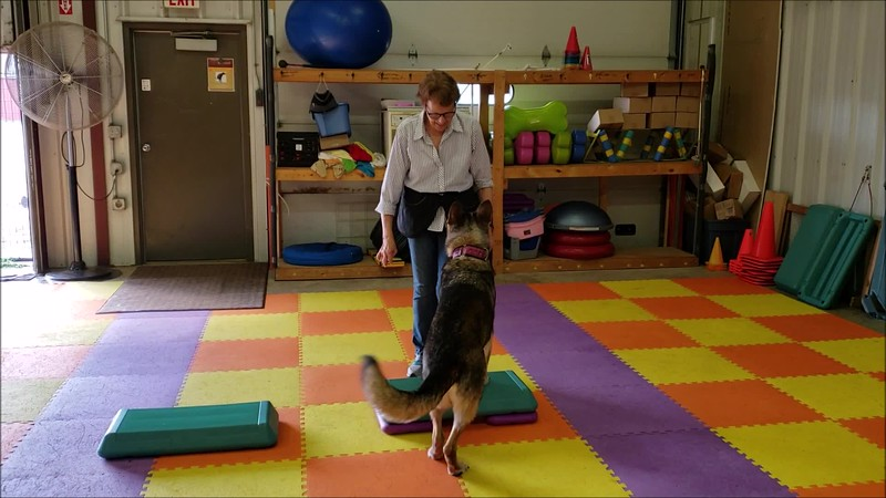 3 activities at our first Get Fit With Fido class!