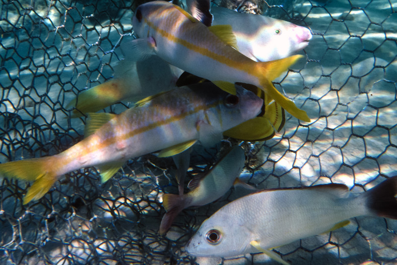 French_Polynesia-0100-1.jpg
