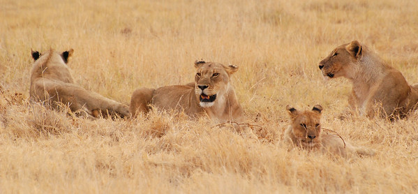 Namibia & South Africa 2010