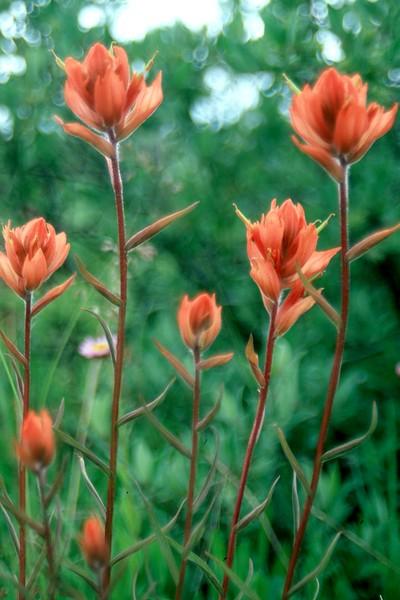 amh FLOWERS (1286).jpg