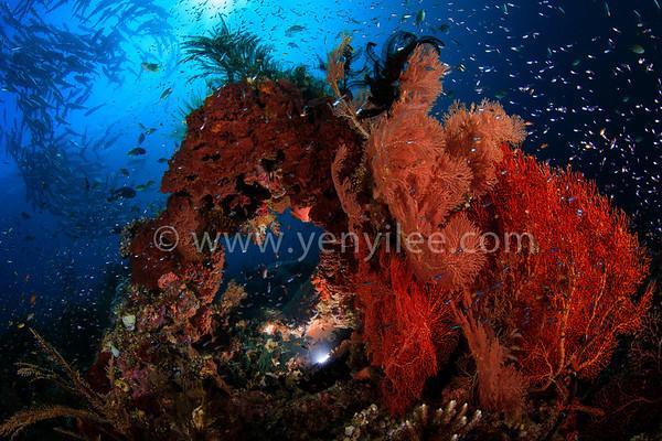 Underwater and Wildlife 水攝以及生態攝影作品