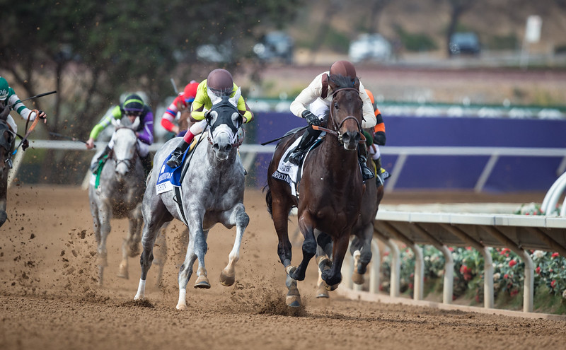 Destin (Giant's Causeway) gray horse wint the Marathon Stakes (G2) at Del Mar on 11.3.2017. John Velazquez up, Todd Pletcher trainer, Twin Creeks and Eclipse Thoroughbred Partners owners.