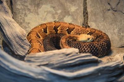 NY, New York - Fort Montgomery & Zoo, 2016