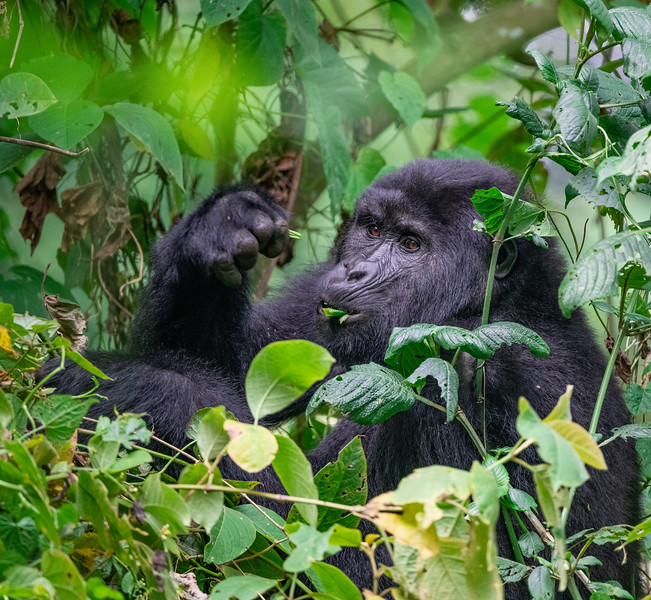 Uganda_T_Gor-2215.jpg