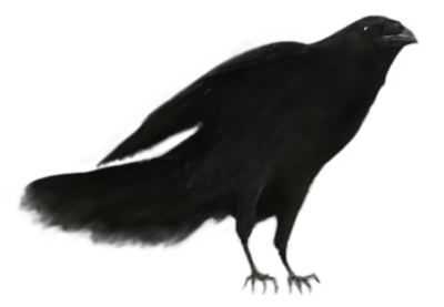 Raven 13.png