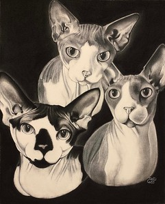 """""""Hairless Friends"""" (charcoal) by Denise Carter"""