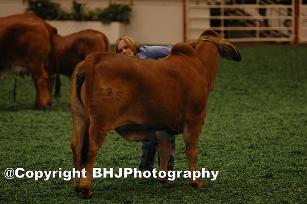 Houston Rodeo 2005