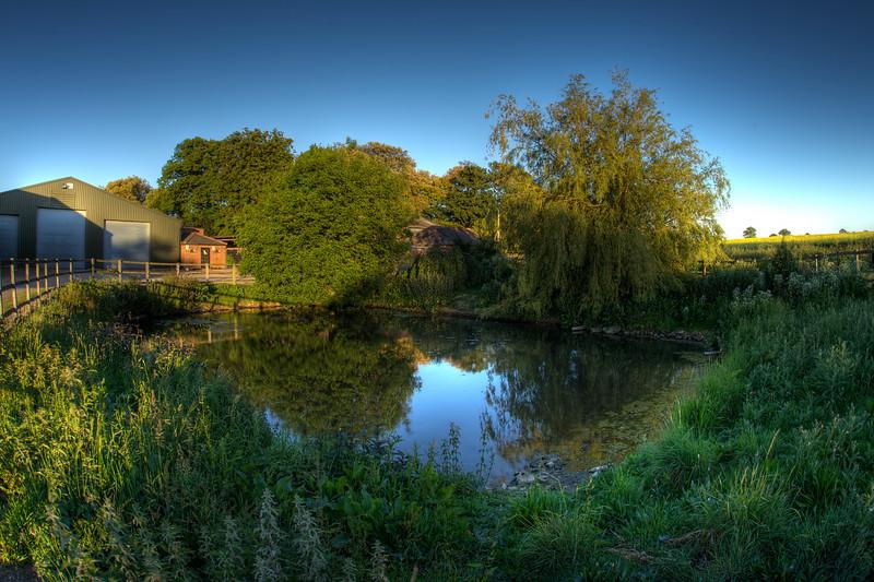 The Duck Pond.jpg