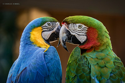 Macaws: 2020