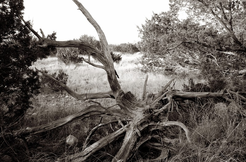 C Photo Lenswork 2007-11-17 Wood Study 3046.jpg