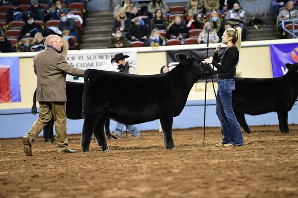 Junior Heifer Calf Division 1