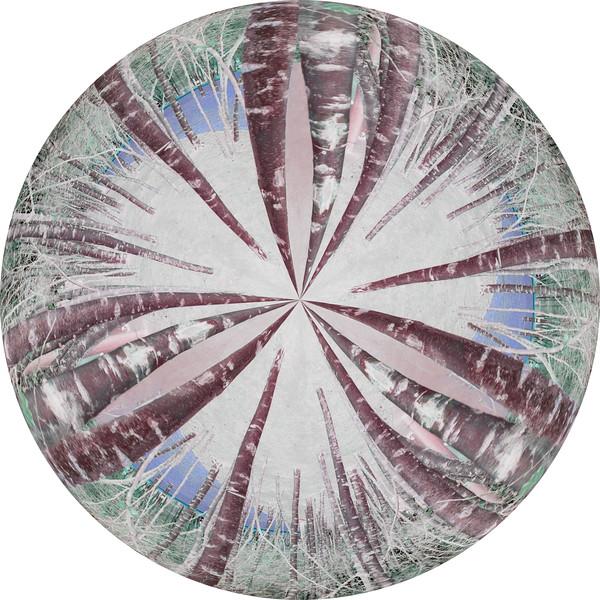 Silver Bich Trees~1379-3pcr.