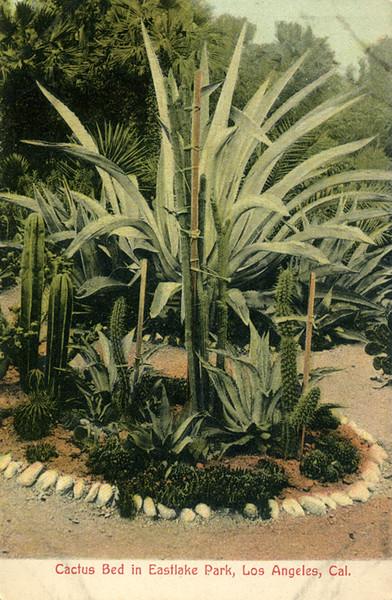 Cactus Bed in Eastlake Park