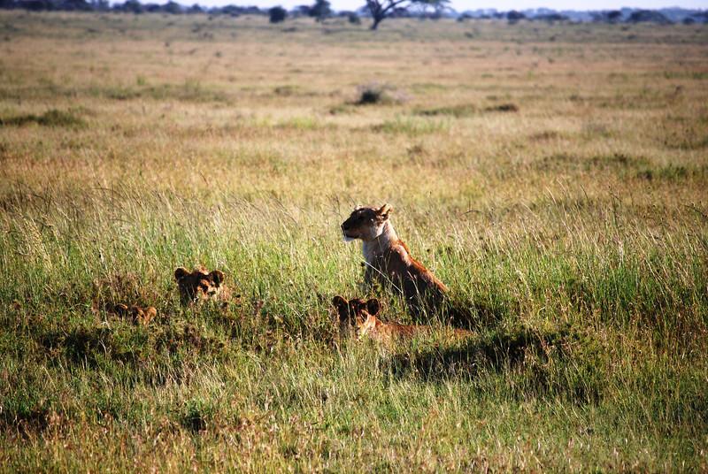 Serengeti (117).JPG