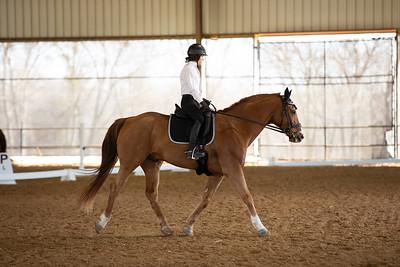 Horse 54