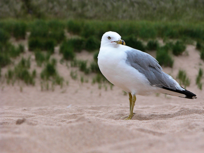 Seagull Two.jpg