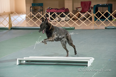 MOC Obedience Ring Trail  3&5  2014