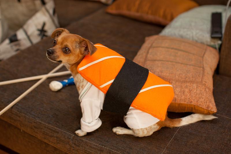 Dog-sushi-halloween-23.jpg
