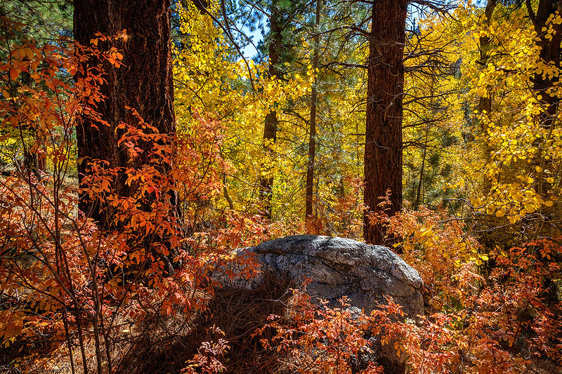 Lundy_Canyon_Fall_Color_Eastern_Sierra_T6A4428.jpg