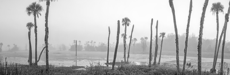Orlando Wetlands on a foggy morning