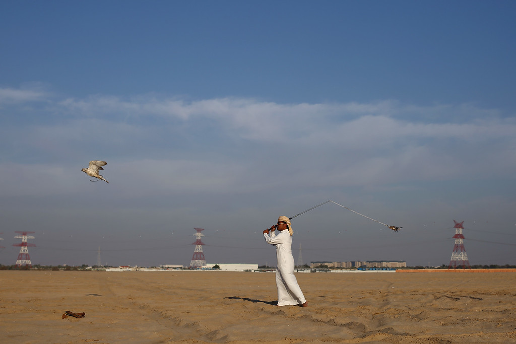 . Saif Al Kendi moves a lure to attract his falcon on February 3, 2015 in Abu Dhabi, United Arab Emirates. (Photo by Dan Kitwood/Getty Images)