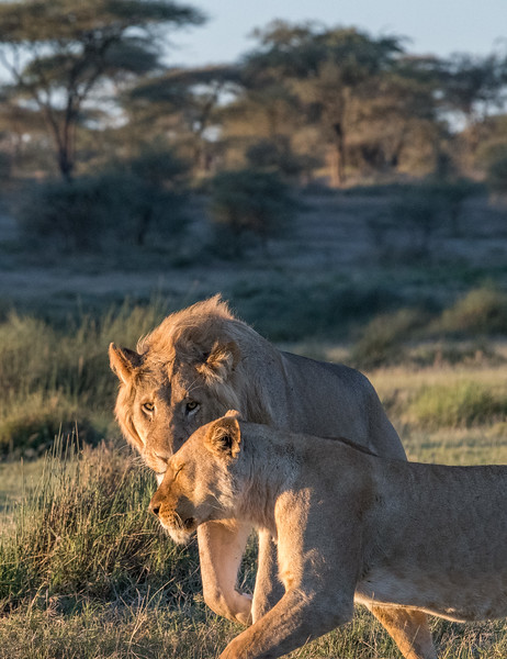 Tanzania_Feb_2018-227.jpg