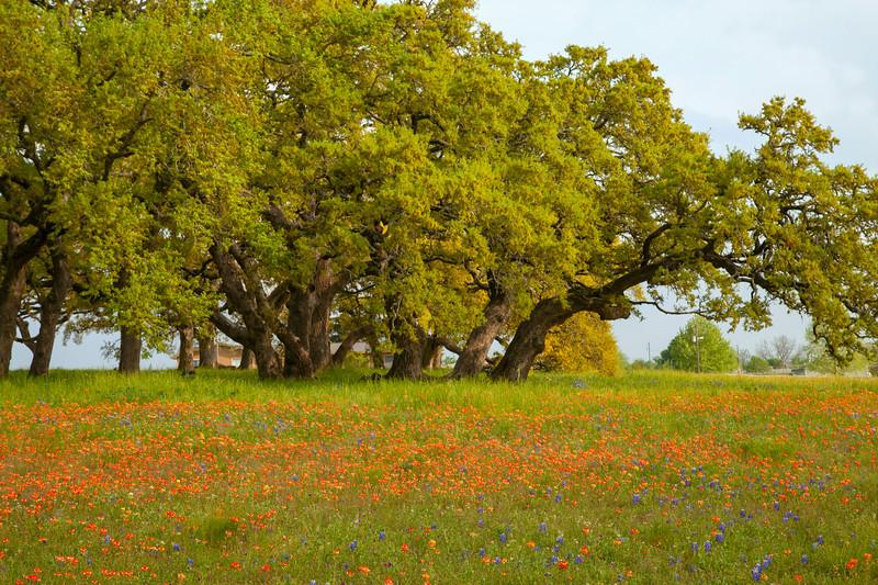 2015_4_3 Texas Wildflowers-8066.jpg
