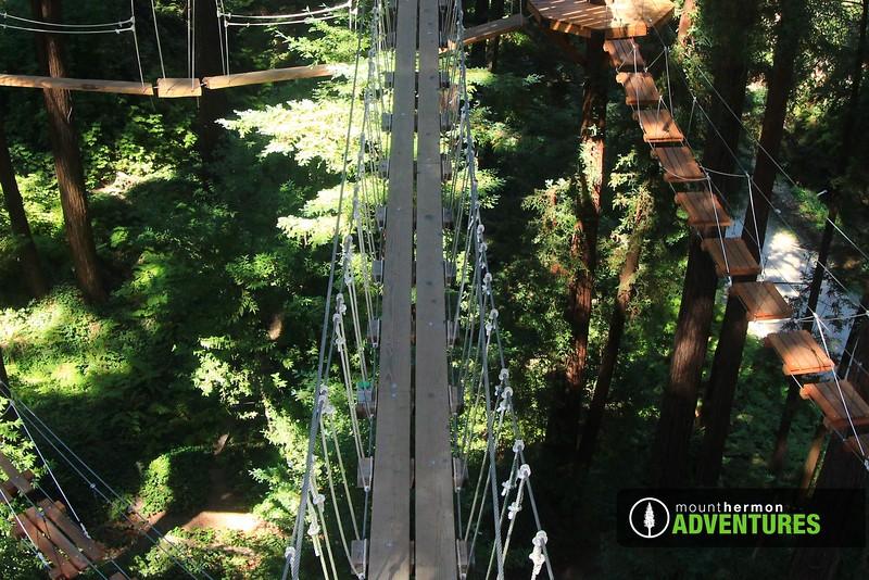 sequoiaportrait_1473446827201.jpg