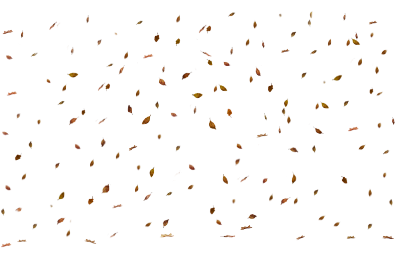 Combined Leaf Overlay 2.png