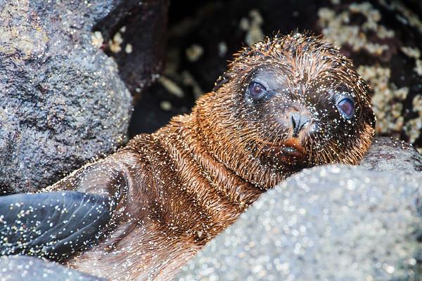 Galapagos: Santa Fe