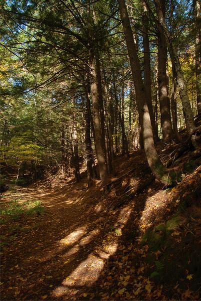 Sentier la Prucheraie - Réserve faunique du Cap Tourmente