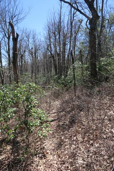 Shelton Pisgah Trail - 4,400'